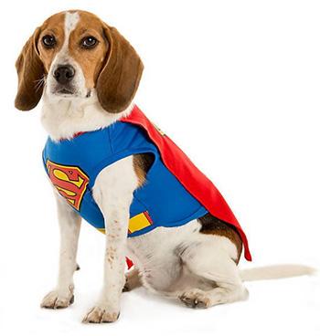 펫스마트 할로윈 수퍼맨 의상 Superman Dog Costume