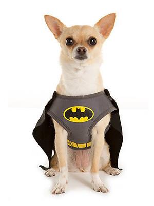 펫스마트 할로윈 배트맨 의상 Batman Dog Costume